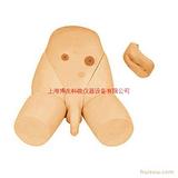 医学护理模型,导尿术训练模型(男女生殖器互换导尿模型)