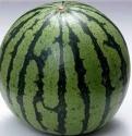 植物葉面肥,西瓜專用肥,西瓜保鮮達60天葉面肥