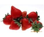 高效葉面肥,草莓專用肥,草莓個大型靚味甜葉面肥