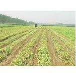 寻求大蒜花生土豆收获机发明专利技术转让