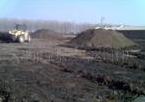 茶叶基地专用生物牛粪有机肥