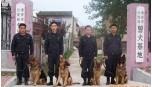 提供护卫犬防范服务