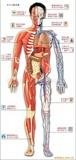 供应吸塑版解剖图