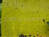 供应黄色粘虫板(图)