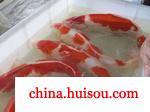 河南金鱼养殖场
