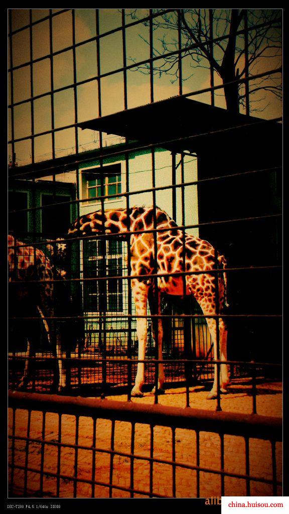 供应动物笼 老虎笼 动物园围栏批发价格
