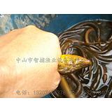 广州黄鳝泥鳅捕捞机、捕黄鳝机