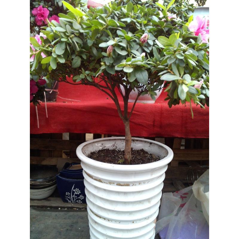 圆形室外大型盆栽植物