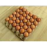 鸡蛋托盘机,鸡蛋托盘,蛋托生产线,蛋托机,纸浆模塑机,水果网