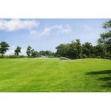 供应广东优质哪里能找到最新技术高尔夫球场草坪种植养护联系地址