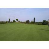 供应广东优质最新技术高尔夫球场草坪种植养护联系电话列表电话地