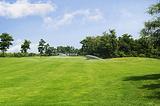 广州宝润园艺灌溉厂家直供哪里能找到最新技术高尔夫球场草坪种植