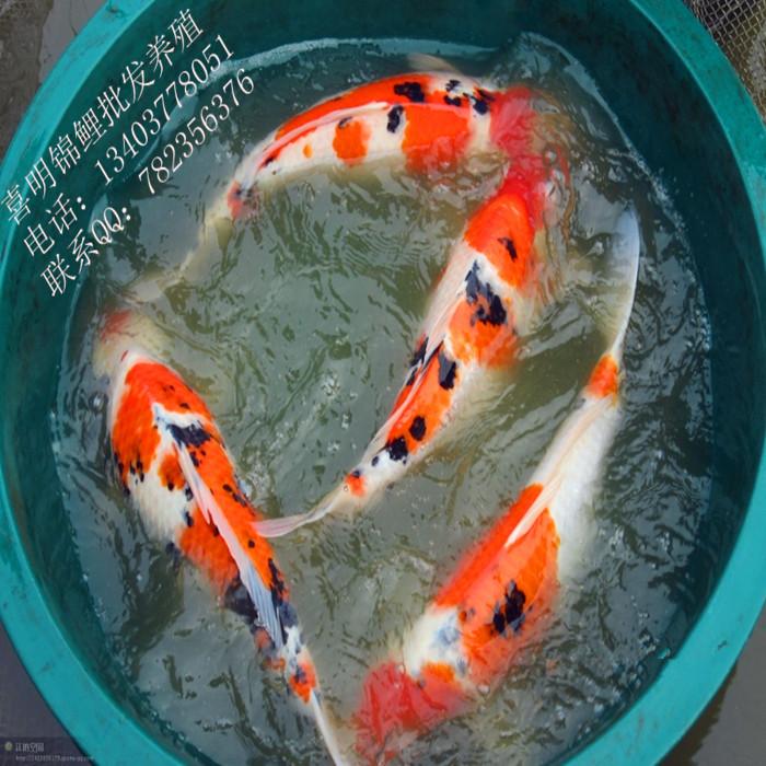 昭和三色 showasanshoku 昭和三色是在日本昭和年间 高清图片