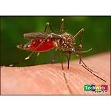 苍蝇蚊子特效药 正品打苍蝇药 杀蚊子药 安全性好的卫生杀虫剂