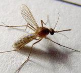 特效苍蝇蚊子药 无色无味 苍蝇蚊子一起杀的药 养殖场专用药