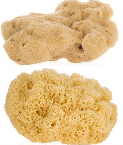 关于海绵的分类及发展史