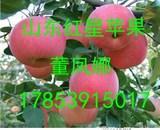 山东苹果供应中心山东红星苹果