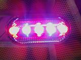 南京威派LED爆闪充电肩灯 行业最值得信任品牌!