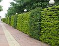 上海植物墙价格