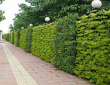 上海植物外墙