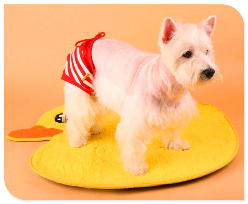 lovabledog 道格 卡通动物地毯 毯子垫子 泰迪比熊垫子