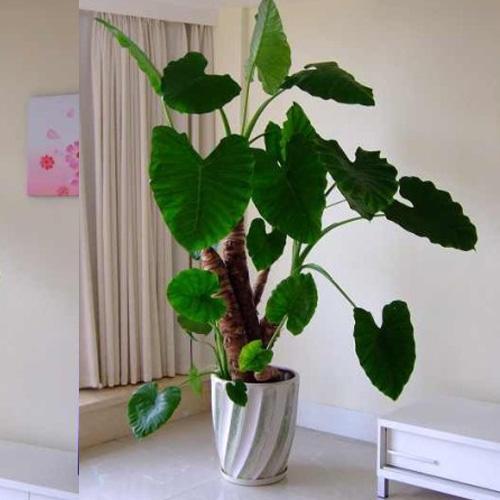 树木盆景价格_办公室租花,室内租花,办公室摆花,室内