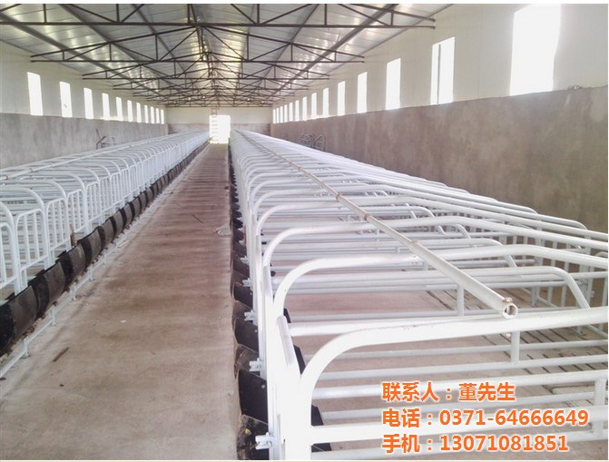 械价格 定位栏养猪场定位栏镀锌定位栏批发价格 郑州市