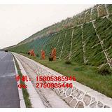 现货供应¥运城护坡土工网=植物支架网