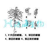江西省微生物菌肥的使用方法微生物菌肥就是源海生物