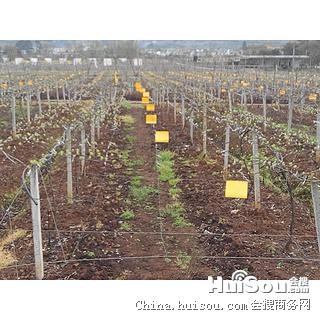 灌溉工具价格_四川成都郫县果树猕猴桃滴灌喷