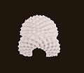 泰国乳胶枕肖邦乳胶枕工厂环保泰国乳胶枕