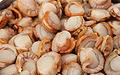 扇贝万斛食品天然扇贝肉批发